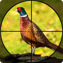 Pheasant Shooter: Crossbow Birds Hunting FPS Games 1.1