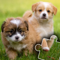 Dogs & Cats Puzzles for kids & toddlers 2 🐱🐩