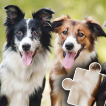 Dogs & Cats Puzzles for kids & toddlers 🐱🐩 🐾