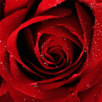 Roses Jigsaw Puzzles 2.10.9